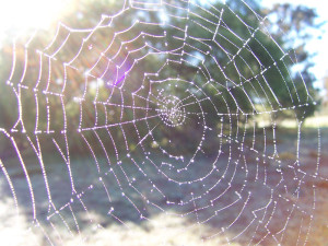 Dewy spider web - Collection of research and developing ideas for Dr Nick Kelly